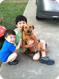 Dachshund Mix Dog for adoption in Houston, Texas - Jorge