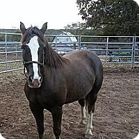 Adopt A Pet :: Mini Me - Fredericskburg, VA