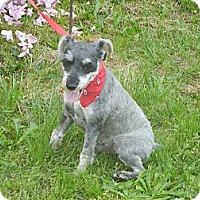 Adopt A Pet :: Jack (Jacko) - Crystal River, FL