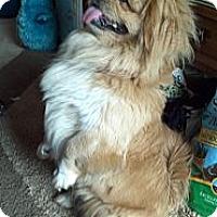 Adopt A Pet :: BoBo - Allentown, PA