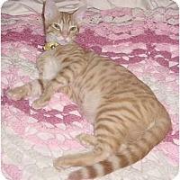 Adopt A Pet :: Caleb - Franklin, NC