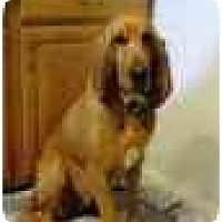 Adopt A Pet :: Punkin Brown - Phoenix, AZ