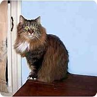 Adopt A Pet :: Abbie - Alexandria, VA