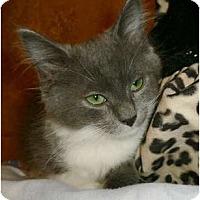 Adopt A Pet :: Minnie Mae - lake elsinore, CA