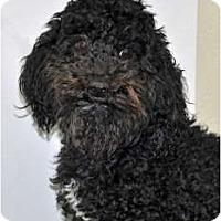 Adopt A Pet :: Odie - Port Washington, NY