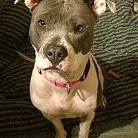 Adopt A Pet :: Marilynn Monroe - Toluca Lake, CA