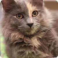 Adopt A Pet :: Caroline - Sacramento, CA