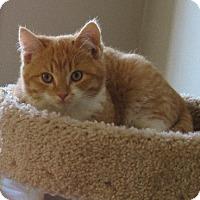 Adopt A Pet :: Karter - Edmonton, AB