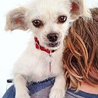 Adopt A Pet :: Louisa - San Diego, CA