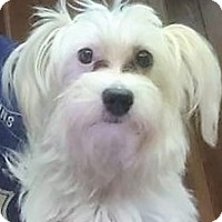 Adopt A Pet :: Baby Girl - Tavares, FL