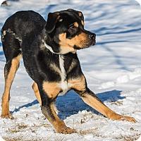 Adopt A Pet :: Cameron - Ile-Perrot, QC