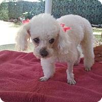 Adopt A Pet :: Dollypop*Adopted - Gainesville, FL