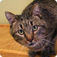 Adopt A Pet :: Tigger - Hastings, NE
