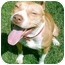 Photo 3 - American Pit Bull Terrier Dog for adoption in Gainesboro, Tennessee - Icey