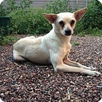Adopt A Pet :: Marianne - Chicago, IL