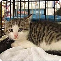 Adopt A Pet :: Angel - Frenchtown, NJ
