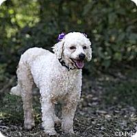 Adopt A Pet :: Princess - Calgary, AB