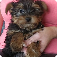 Adopt A Pet :: Tiny Town - Greenville, RI