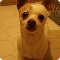 Adopt A Pet :: Princess URGENT - Creston, CA