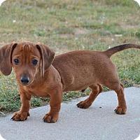 Adopt A Pet :: *Yogi - PENDING - Westport, CT