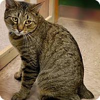 Adopt A Pet :: Braveheart - Byron Center, MI