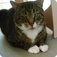 Adopt A Pet :: Bobcat - Hamburg, NY