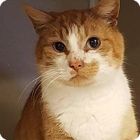 Adopt A Pet :: Frederick - Grayslake, IL