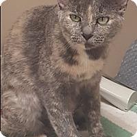 Adopt A Pet :: Marcy - Americus, GA
