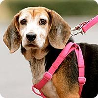 Adopt A Pet :: Mika - Surrey, BC