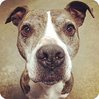 Terrier (Unknown Type, Medium) Mix Dog for adoption in Lake Odessa, Michigan - Aura