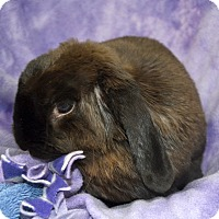 Adopt A Pet :: Misty - Wheaton, IL