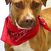 Adopt A Pet :: Red - Casa Grande, AZ