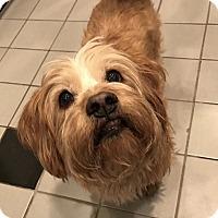 Adopt A Pet :: Rags - Garland, TX