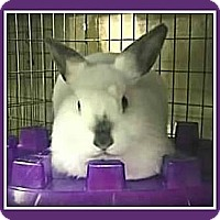 Adopt A Pet :: Hootie - Williston, FL