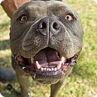 Adopt A Pet :: Wimpy - Blanchard, OK