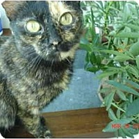 Adopt A Pet :: Tortellini - New York, NY
