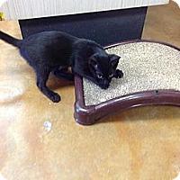 Adopt A Pet :: Glenn - Lake Charles, LA
