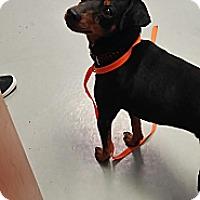 Adopt A Pet :: Mikko - Fort Riley, KS