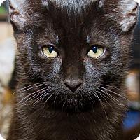 Adopt A Pet :: Marlin - Irvine, CA