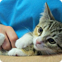 Adopt A Pet :: Sally - Toledo, OH