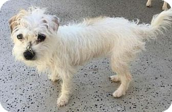 Terrier (Unknown Type, Small) Mix Dog for adoption in Brattleboro, Vermont - Princess