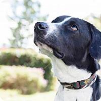 Adopt A Pet :: Berkeley - San Diego, CA