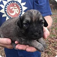 Adopt A Pet :: Puppy Jewel - Alabaster, AL