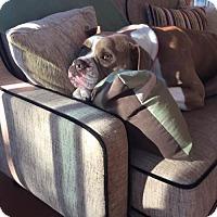 Adopt A Pet :: Ella - Tampa, FL