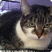 Adopt A Pet :: Skreetch (Cherry Hill PetSmart) - Blackwood, NJ