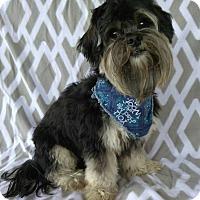 Adopt A Pet :: King - Lawrenceville, GA
