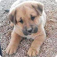 Adopt A Pet :: Marshall - Las Vegas, NV