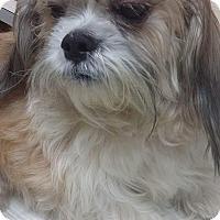 Adopt A Pet :: Benji - Ardmore, OK