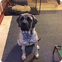 Adopt A Pet :: Duchess - Chambersburg, PA