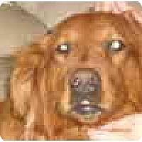 Adopt A Pet :: chloe - cedar grove, IN